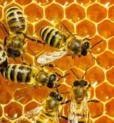 Solar Roofpod bees