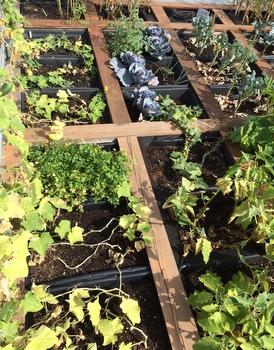 RoofPod Harvest